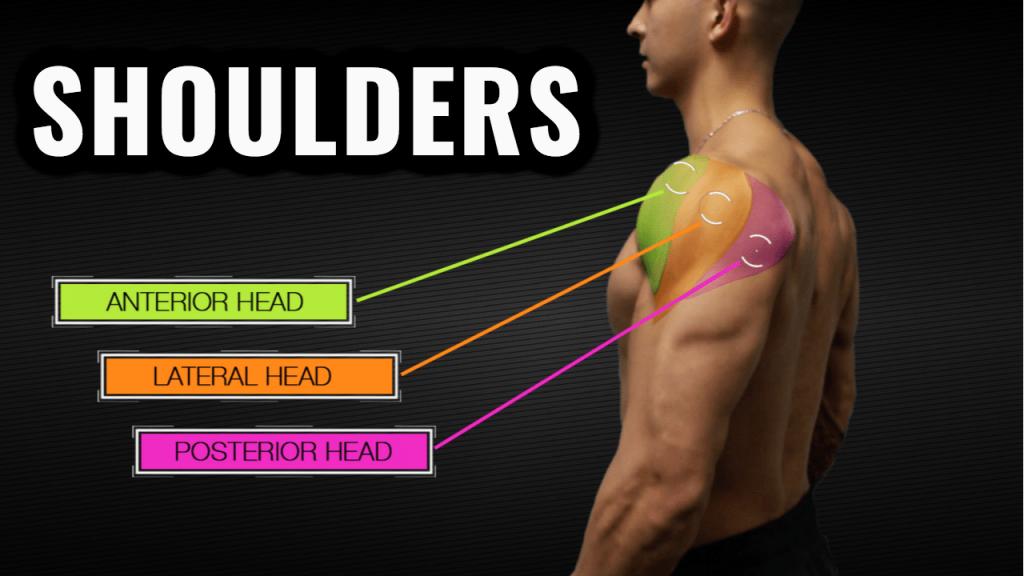 Shoulder Workout Routine (4 Exercises For Bigger Delts
