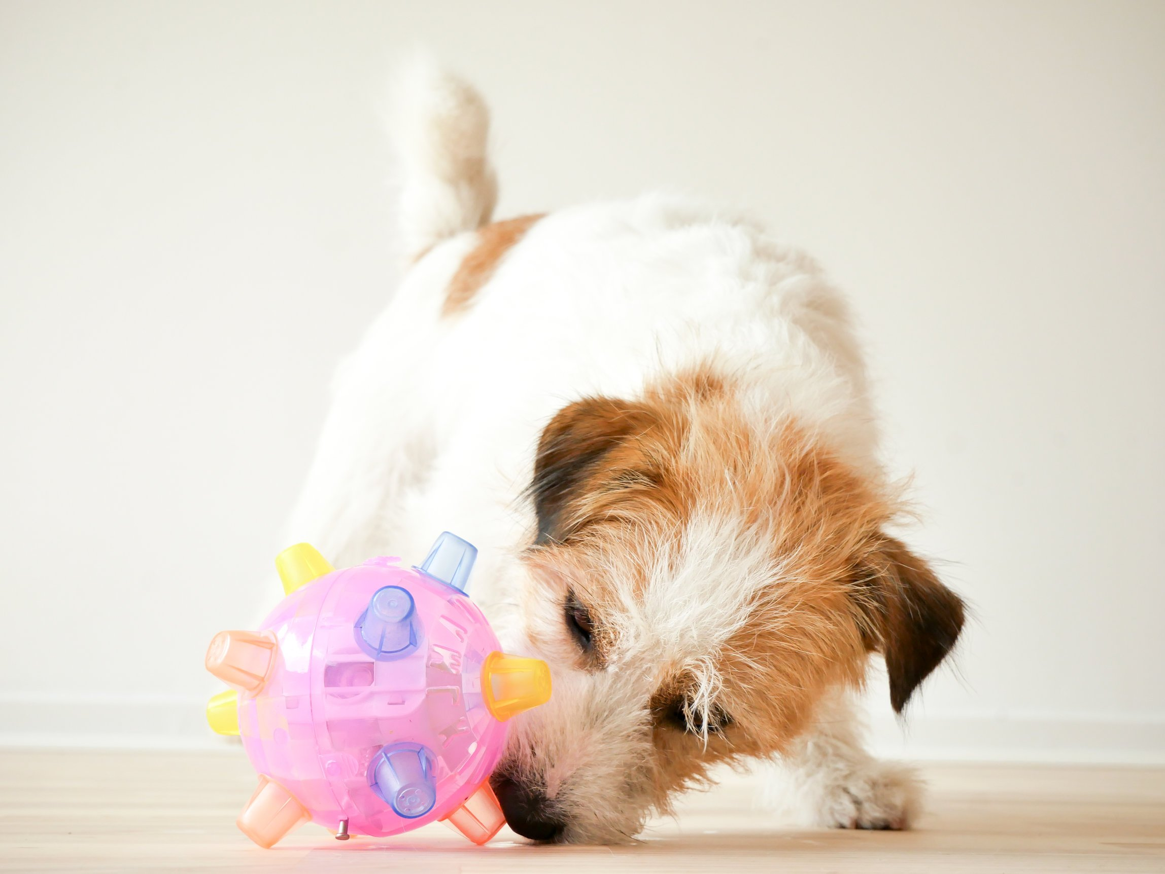 5 Tips To Keep Your Dog Busy Indoors